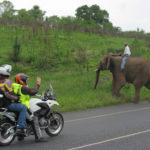 Optional Visit to Elephant Sanctuary