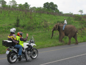 Optional Visit to Elephant Sanctuary
