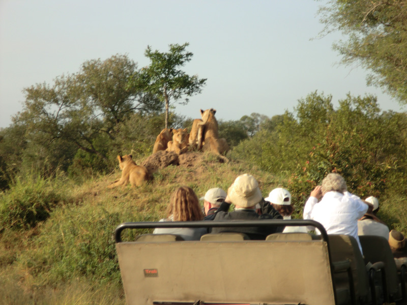 Private Safari Vehicles