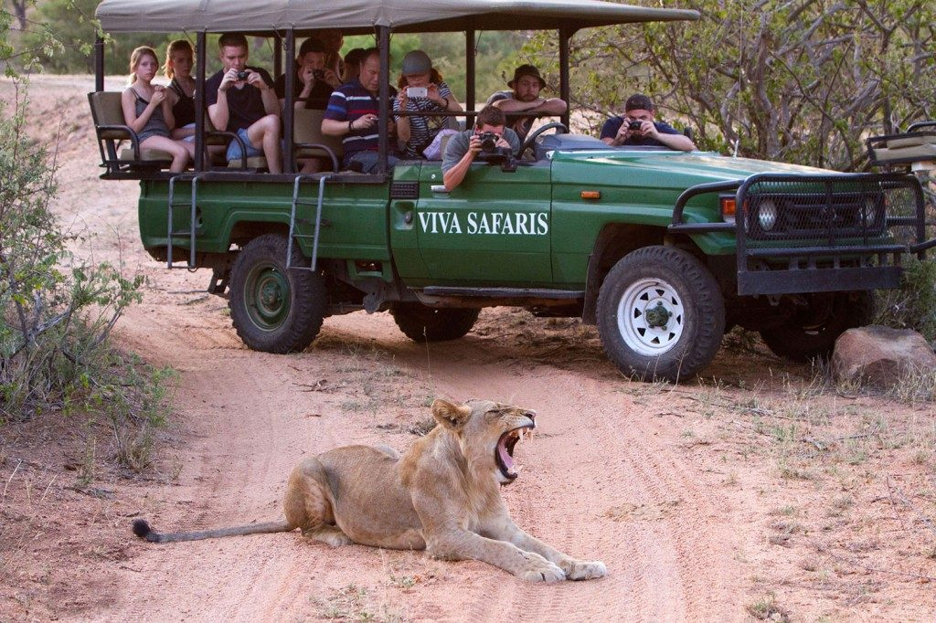 Full Day Safari into Kruger National Park