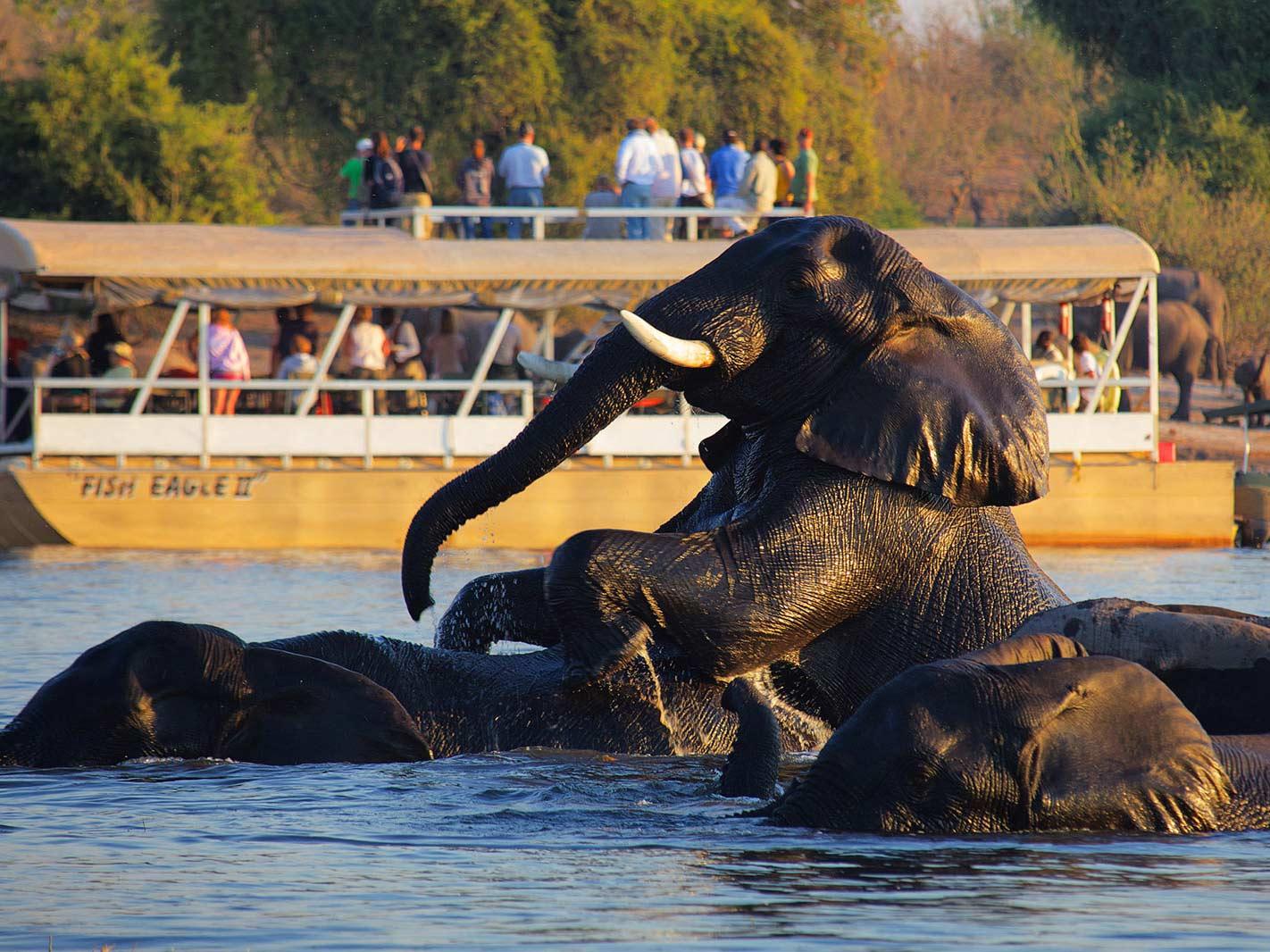 Chobe-Boat-Safari