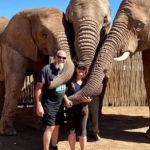 Elephant-Experience