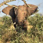 Hluhluwe-Elephant