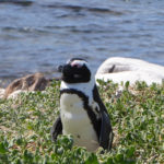 Penquin-views-at-Lunch
